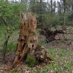 Alter Baum (DSC01851)