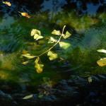 Pfütze im Herbst