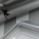 Kreuzviertel Dortmund - Nisthilfen für Mauersegler