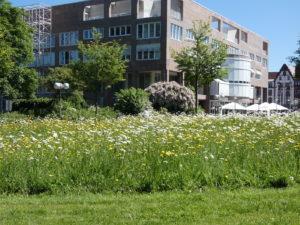 Blumenwiese am Stadtgarten